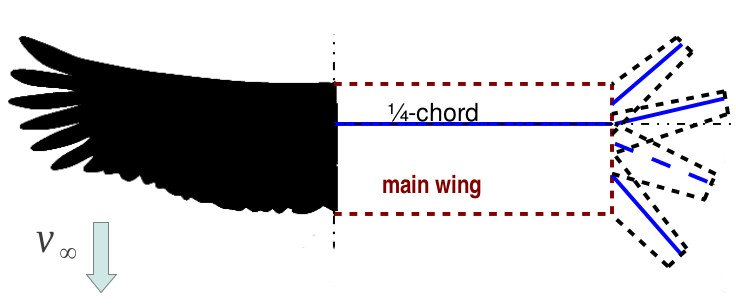 bird wing and lifting line model